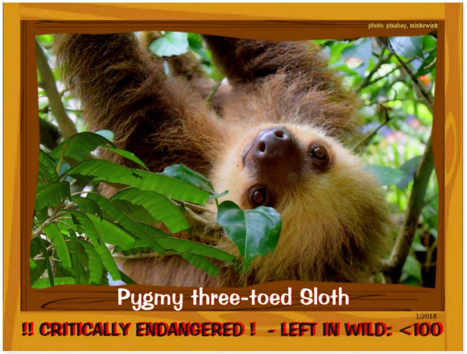 Three Toed Pygmy Sloth front page