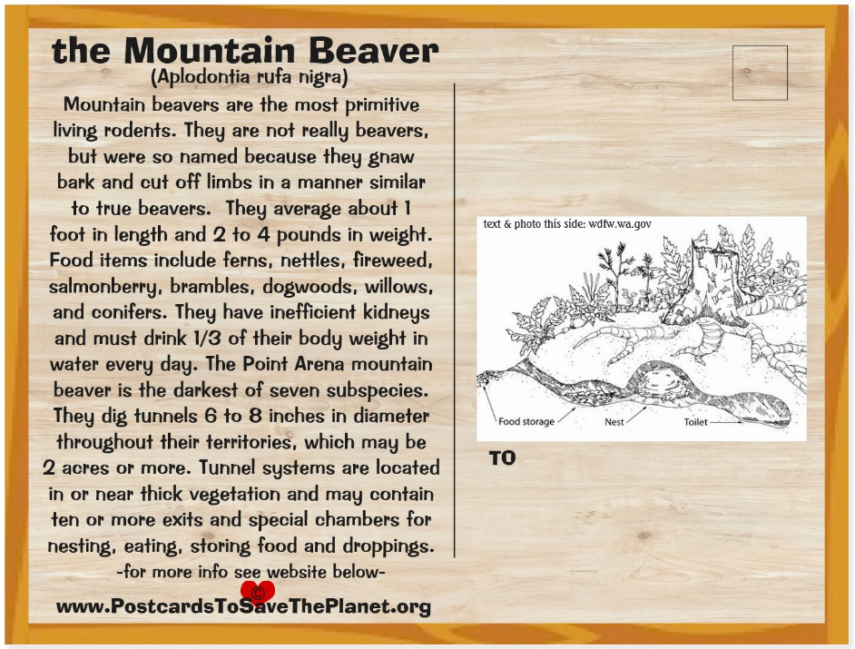 Point Arena Mountain Beaver back page