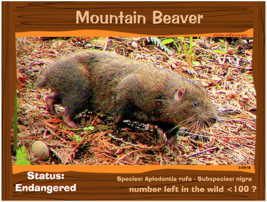Point Arena Mountain Beaver front page