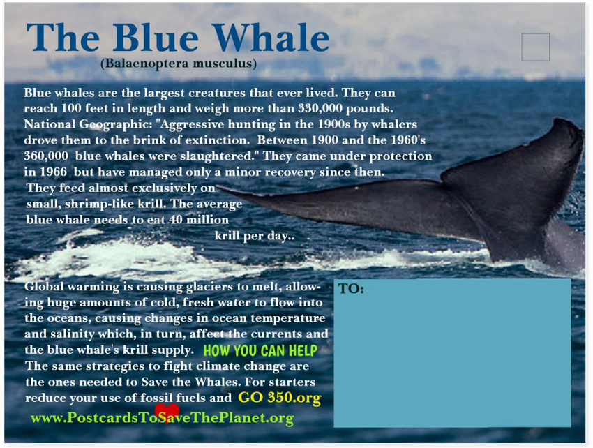 the Blue Whale postcard back page