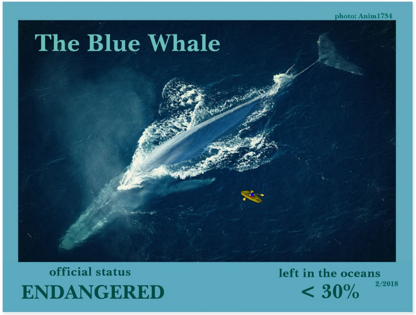 the Blue Whale postcard front page
