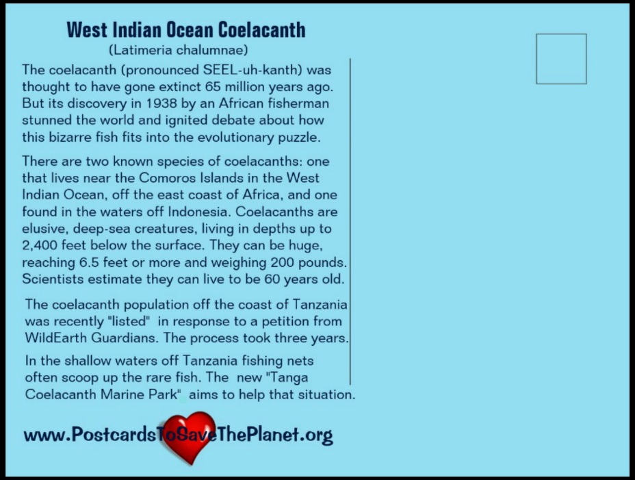 the Coelacanth postcard back page