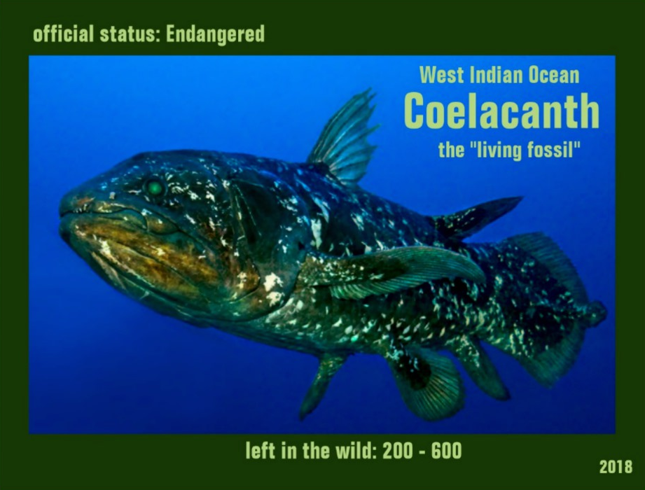 the Coelacanth postcard front page