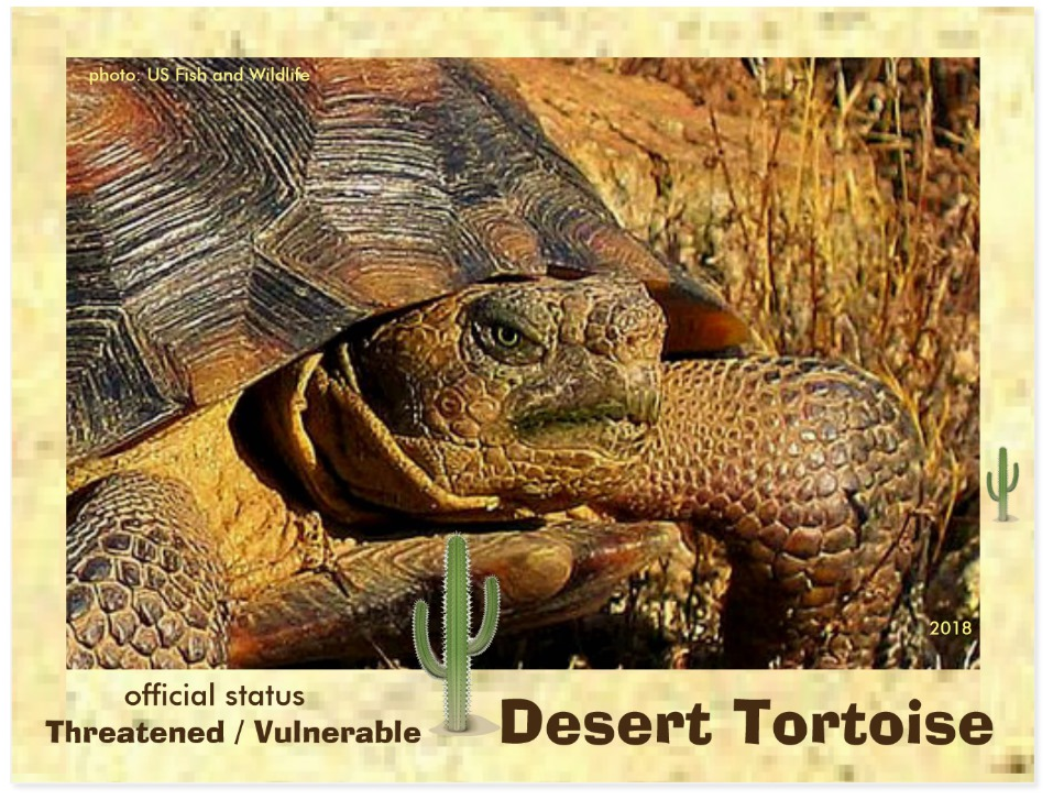 the Desert Tortoise postcard front page