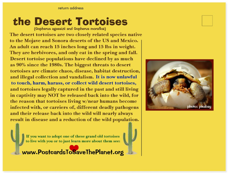 the Desert Tortoise postcard back page