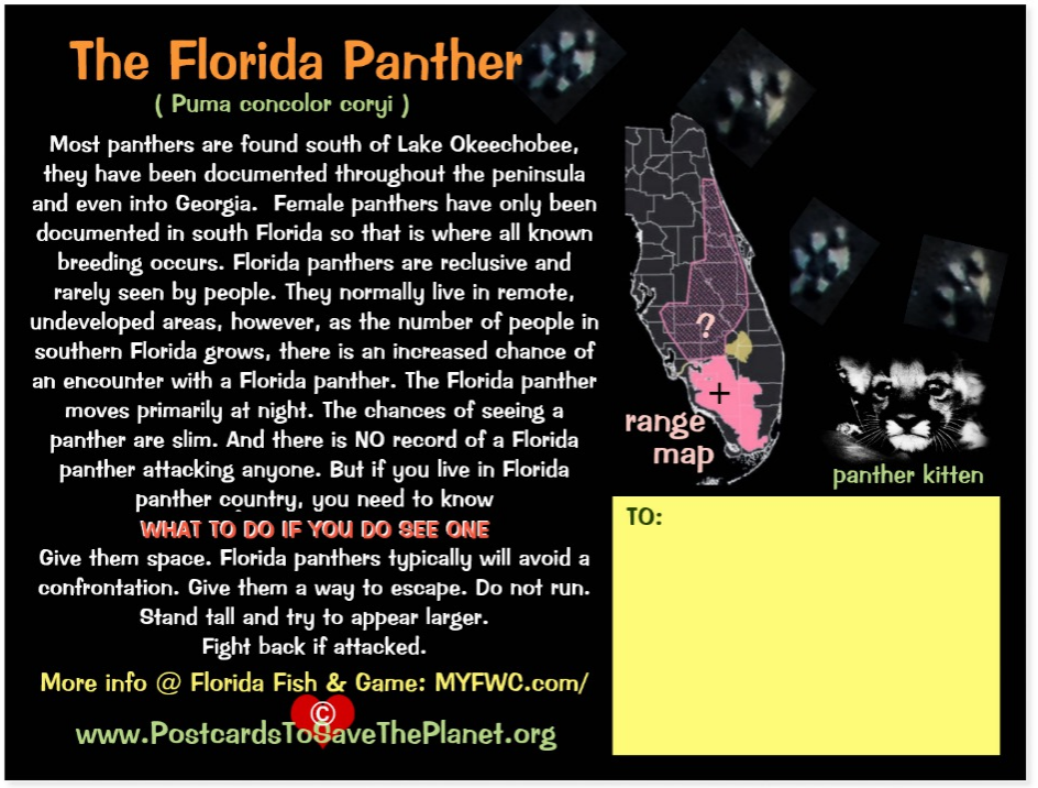 the Florida Panther postcard back page