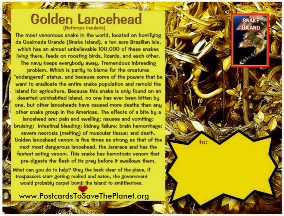 the Golden Lancehead postcard back page