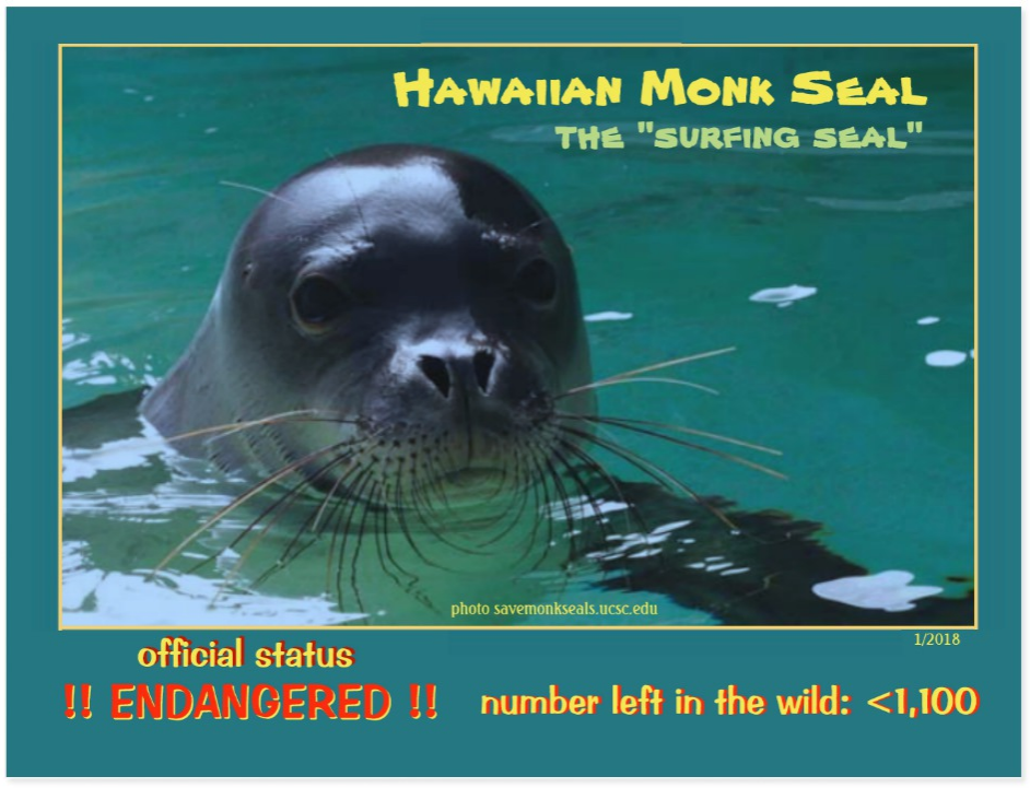 the Hawaiian Monk Seal postcard front page