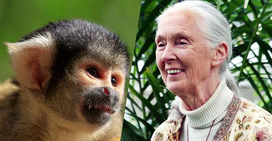 Jane Goodall and monkey