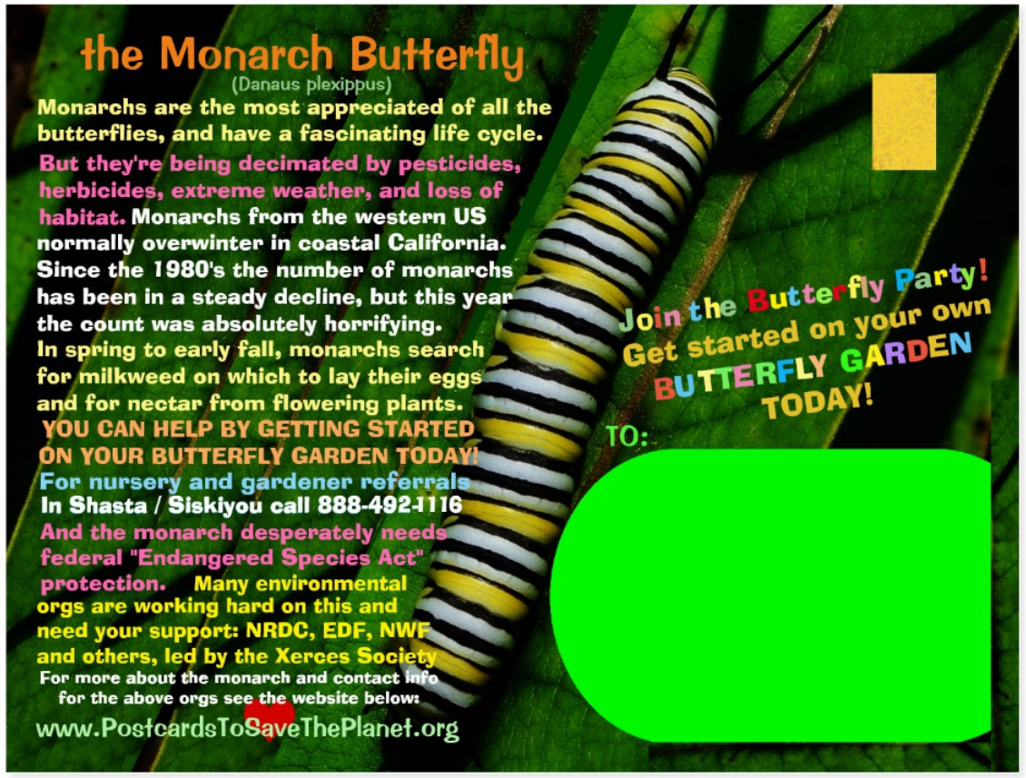 Monarch Butterfly  postcard back page