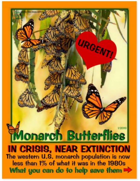 Monarch Butterfly postcard front page