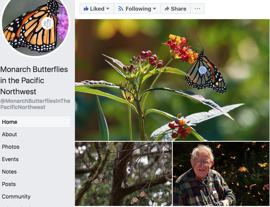Monarch Butterflies in the Pacific Northwest