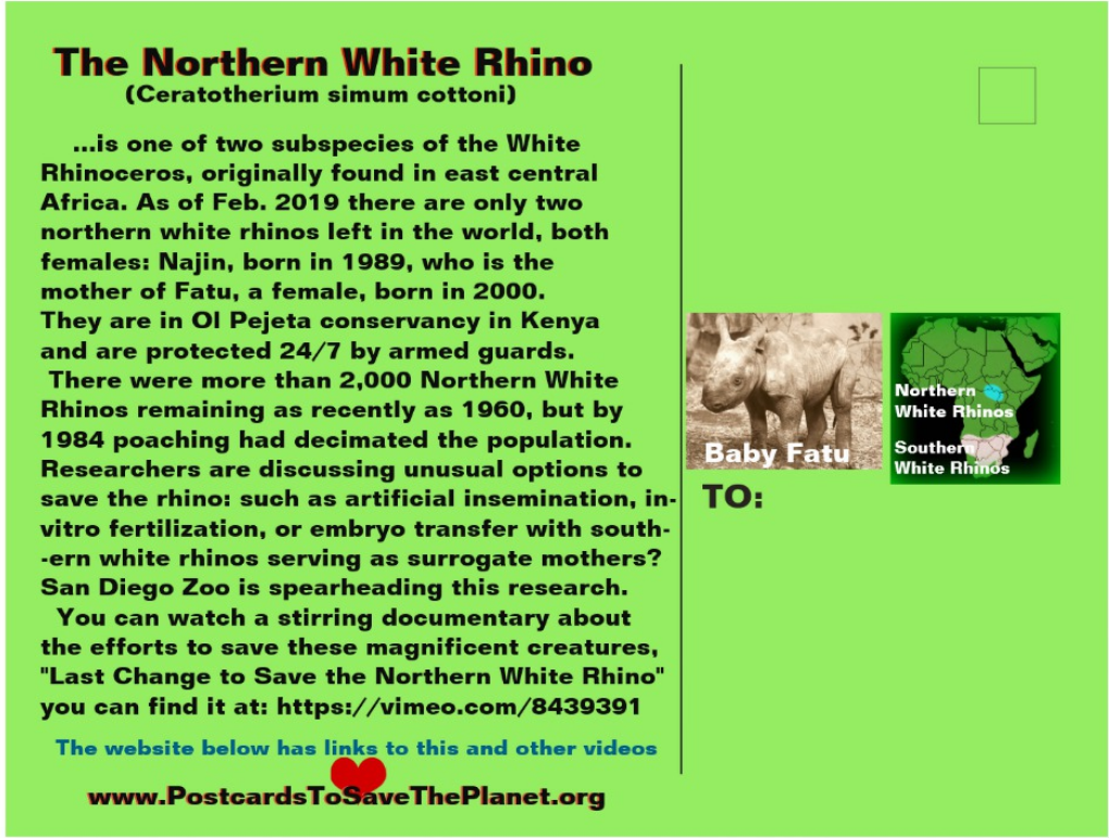 the Northern White Rhino postcard back page