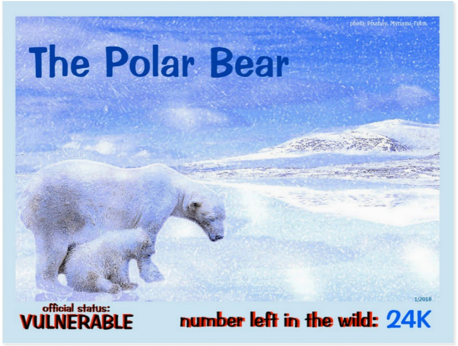 Polar Bear front page