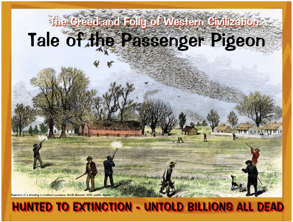 Passenger Pigeon front page