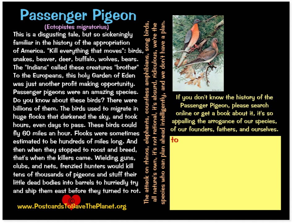 Passenger Pigeon back page