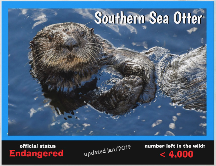 Southern Sea Otter front postcard