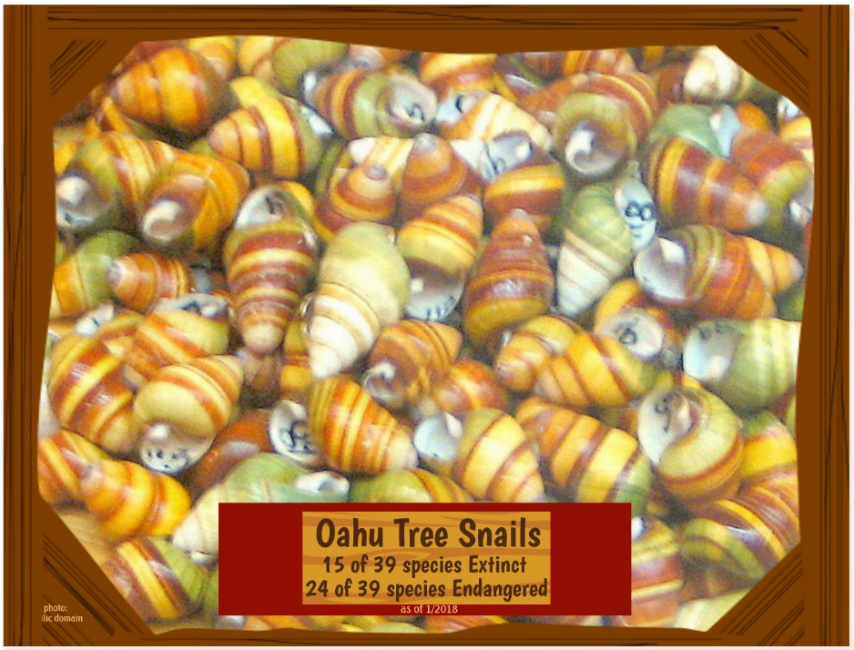 the Oahu Tree Snails postcard front page